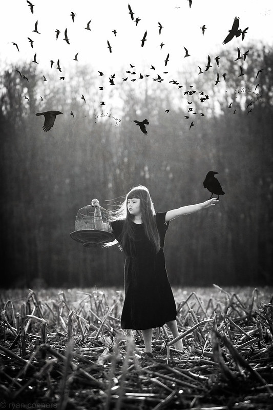 Catching Crows