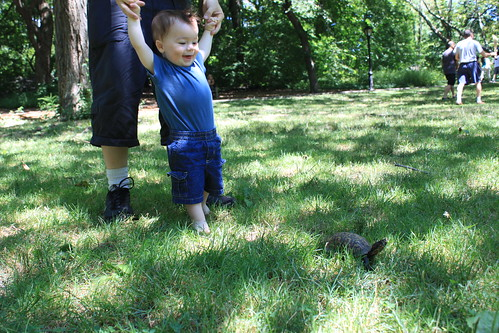 New York - Central Park - Sagan Stalks Box Turtle (Closer)