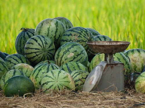 223/366 - Watermelons by Flubie
