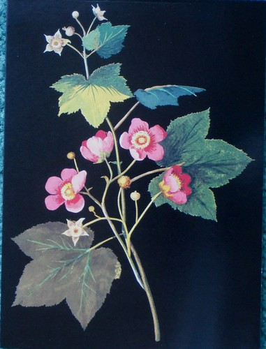 sweet flowering raspberry