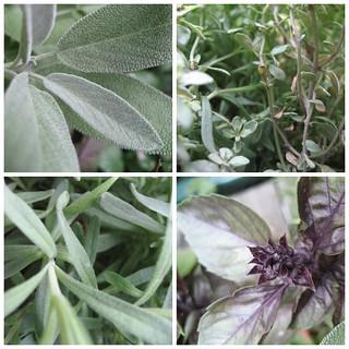 Herbs Not Humans