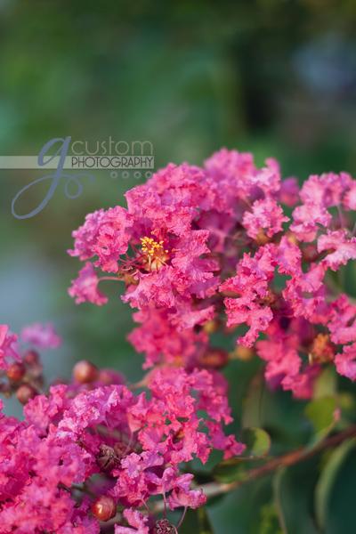 30 - floral 6