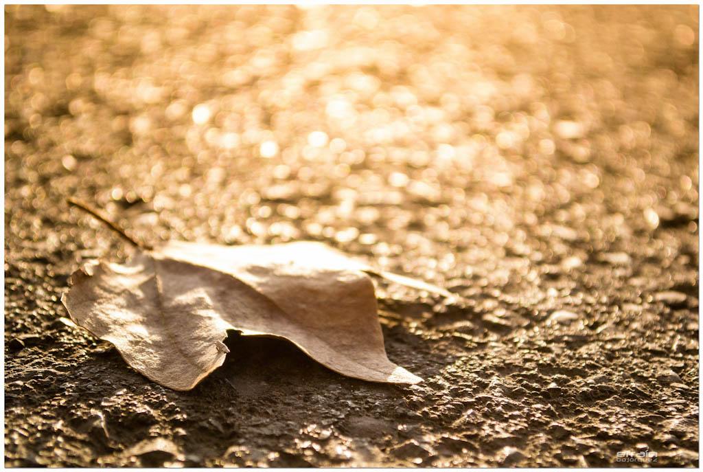 2012-08-04: Les feuilles mortes