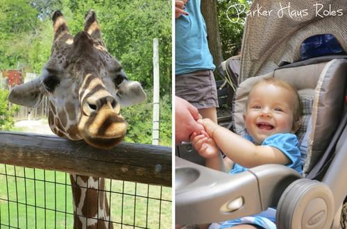 giraffe-imp