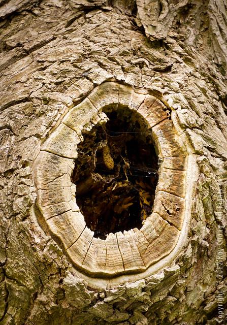 Tree Trunks II, Green Lake, 2012