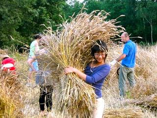 Quaglia raccogliendo il grano
