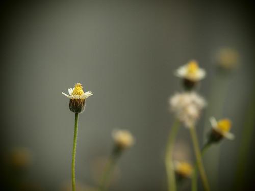 239/366 - Flower by Flubie