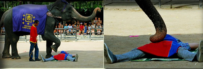 大象表演1