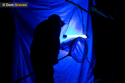 Moth trap and man with net