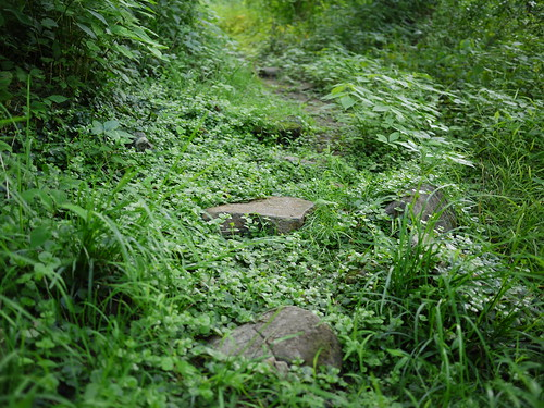 overgrown stone path