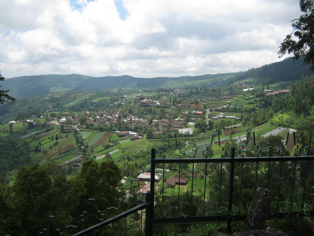 view of tea garden