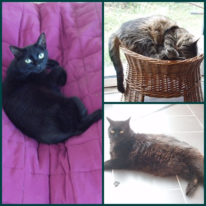 3-cats