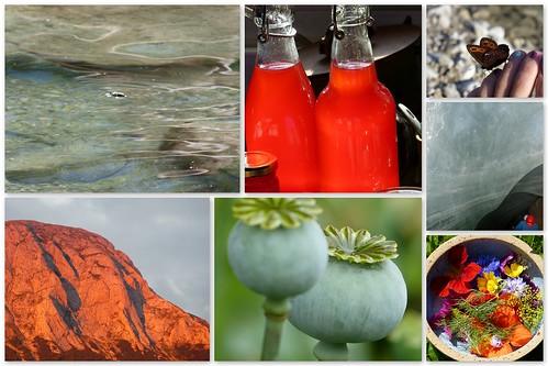 Treibholzfisch 2012-07-211