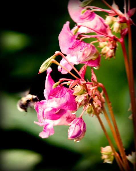 feeding-bee-pinhole-copy