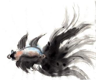 Black Fantail