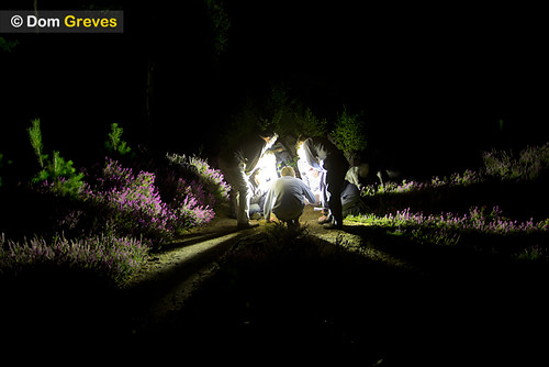 Light rays from moth trap on heath