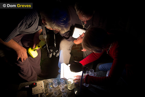 Identifying and recording moths