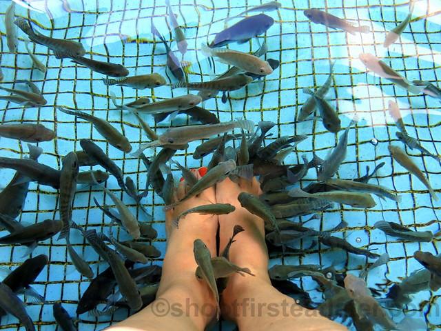 Manila Ocean Park's fish spa-001