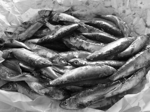 sardines...before..