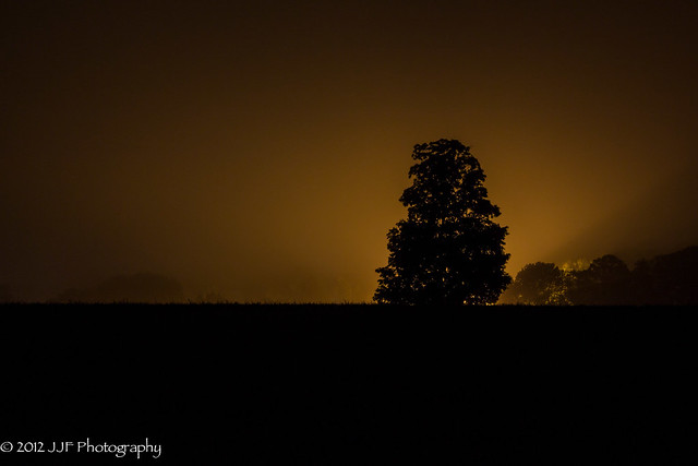 2012_Sep_06_Tree Silhoutte_005