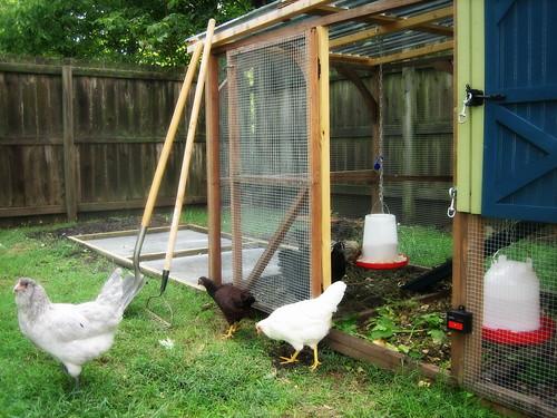 20120908. Extending the chicken run.