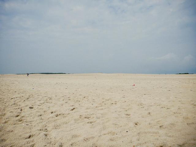 assateague national island seashore