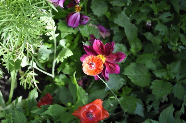 2012-08-19 garden 02