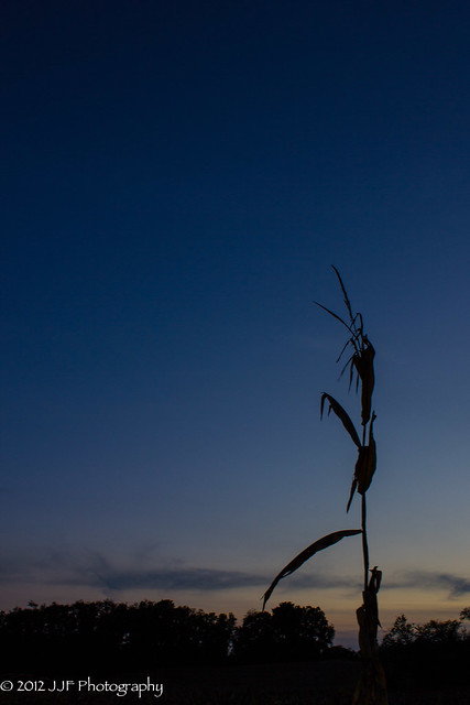 2012_Sep_17_Empty Corn Field_019