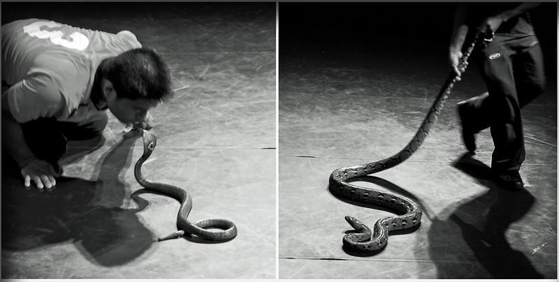 空手捉蛇表演