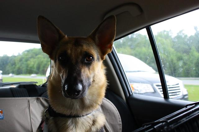 A serious car-riding face