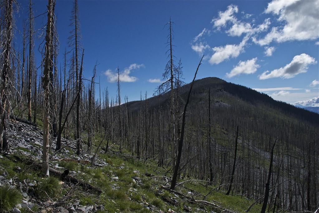 Thompson Peak trail
