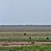 Etosha National Park impressions, Namibia - IMG_3071_CR2_v1