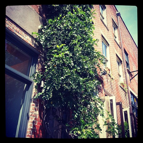 Ivy down in the Village #nyc
