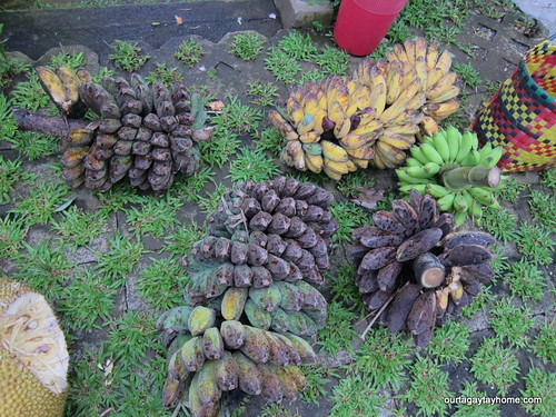 Tagaytay harvest Aug2012 (1)