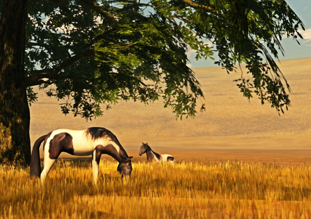 The horses (by Ricco Saenz)