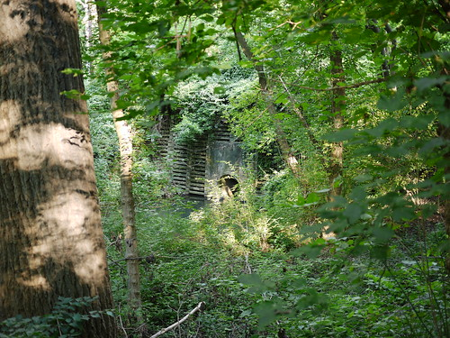 overgrown structure