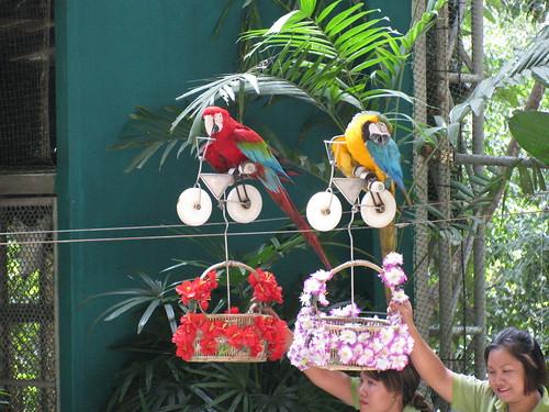 Namuang Safari Bird Show by holidaypointau