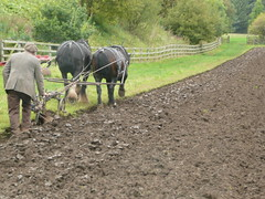 Jim Elliott ploughing with horses