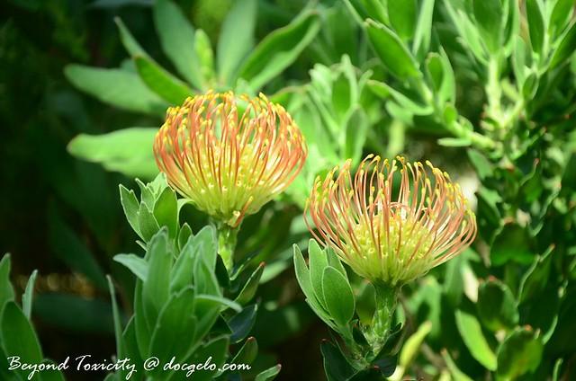 rare bloom