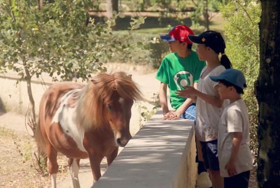 pony, horseback, benefits, horse