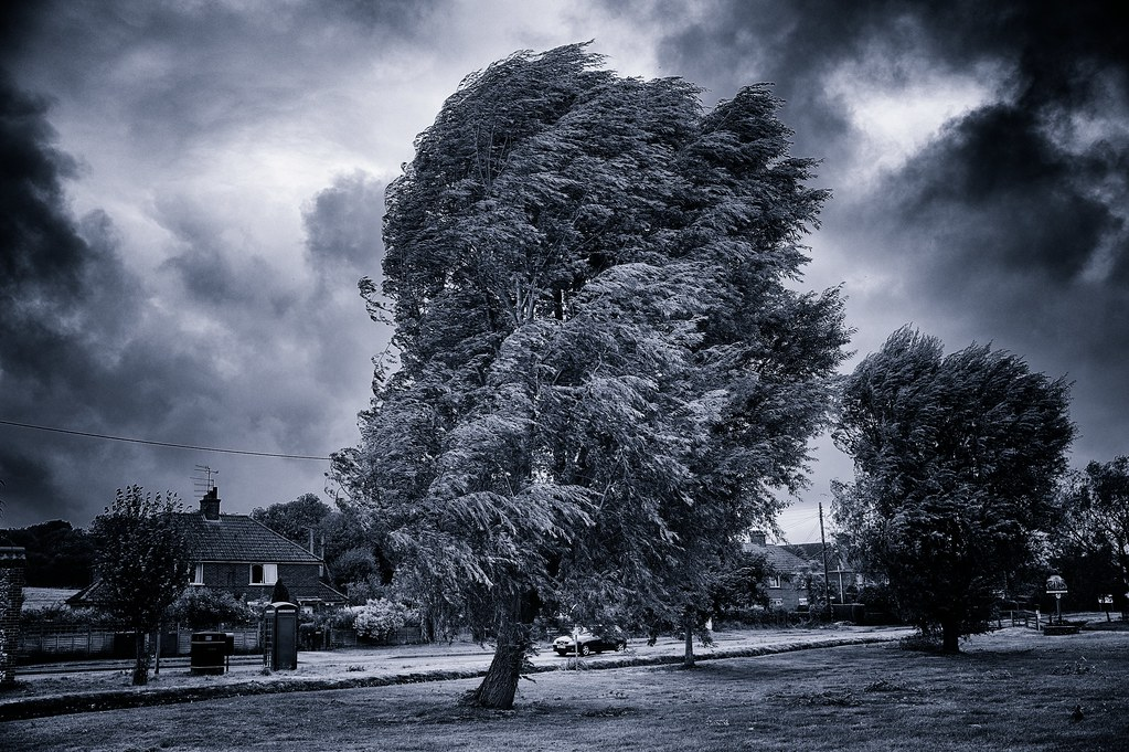 Windy Tree in blue