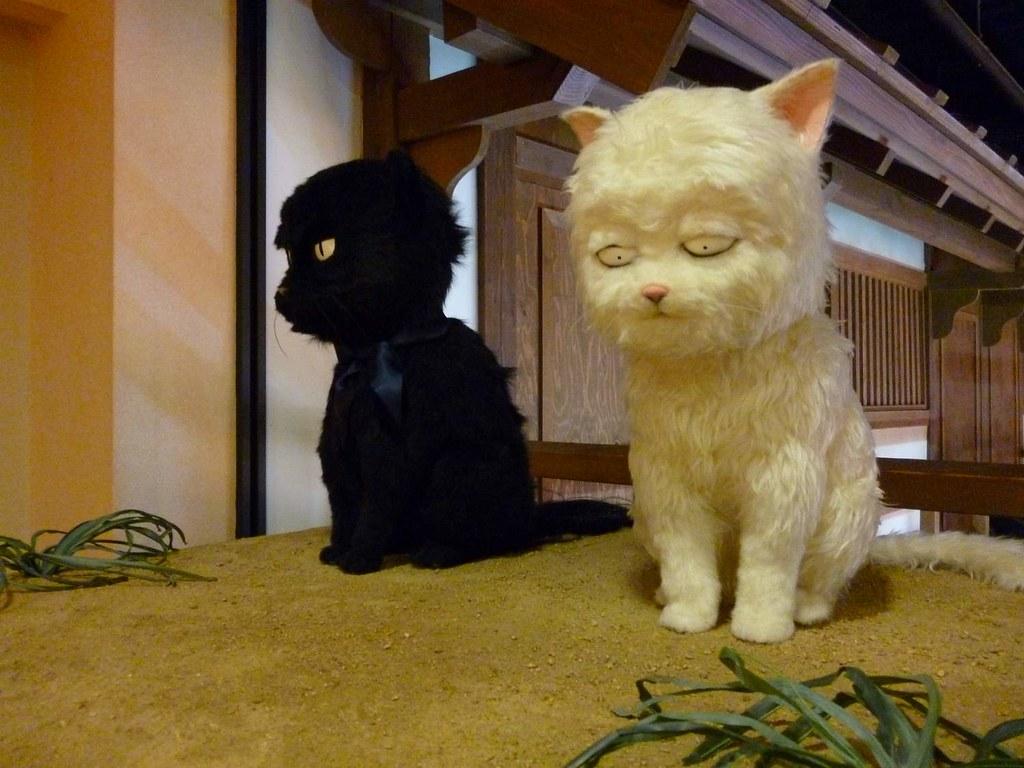 Gintoki in cat form