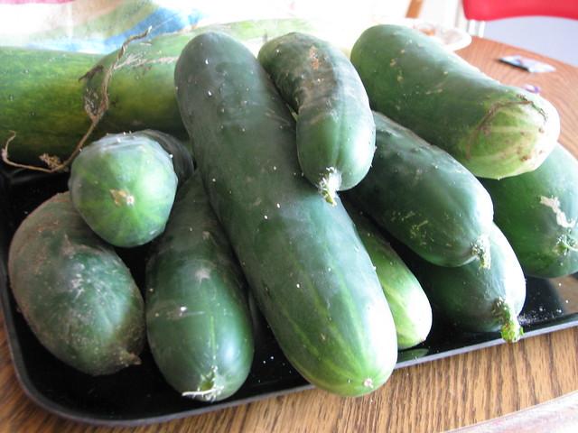 Too many cucumbers!