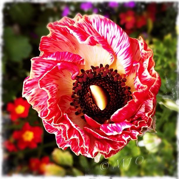 #flower #blooming #spring #instagramhub #imagery