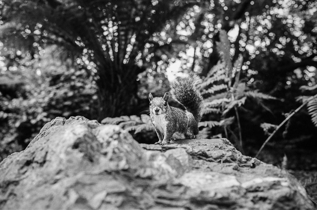 Stow Lake Squirrel