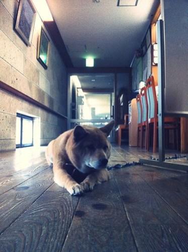 老人ホームの犬