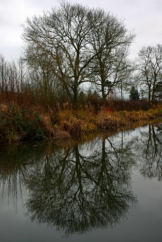 20111227-12_Tree Reflection - Foxton  Locks by gary.hadden