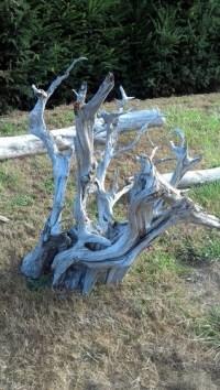 Sun-silvered premium specimen driftwoood.