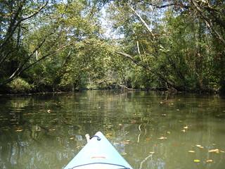 Paddling around the island on Saluda River