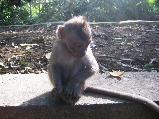 look a baby monkey